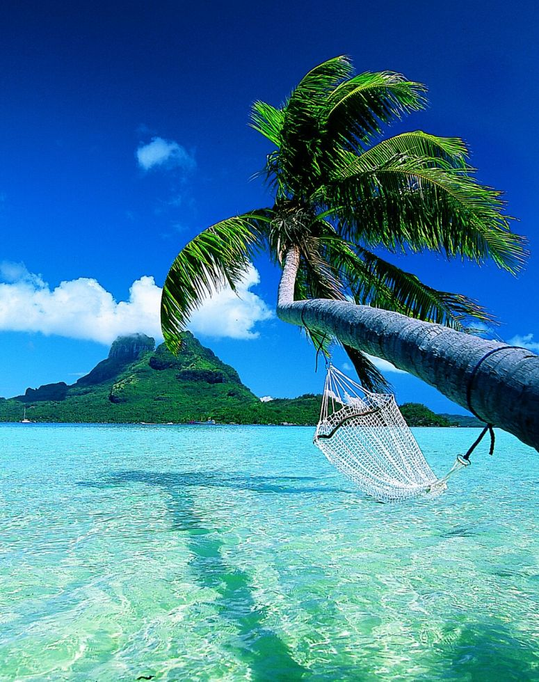 Bora-Bora-coconut-tree-in-beaches